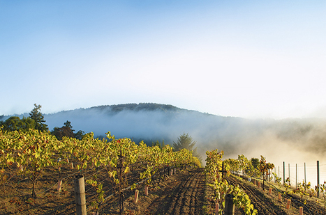 Six Sonoma Coast producers to watch | Pinot Post | Scoop.it