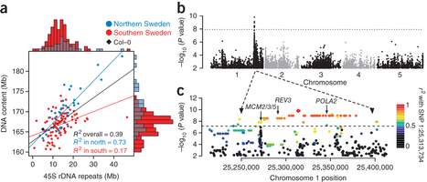 Massive genomic variation and strong selection in Arabidopsis thaliana lines from Swede   plant cell genetics   Scoop.it