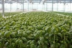 Wisconsin's Future Farm Packs Sustainable Punch with Cow Powered Aquaponics Operation | Vertical Farm - Food Factory | Scoop.it