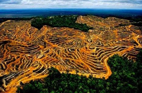 L'huile de Palme : l'huile qui fait vraiment tache.... | Toxique, soyons vigilant ! | Scoop.it