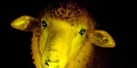 Les animaux génétiquement modifiés attendent leur heure | Our Future | Scoop.it