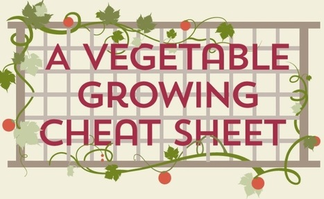 Everything You Need to Know About Vegetable Gardening in One Graphic | Over Grow The System | Agroindustria Sostenible | Scoop.it