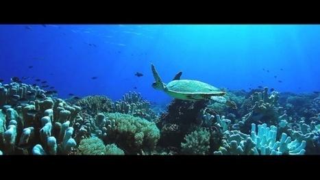Vidéo Full HD | Indonésie - Voyage plongée en mer de Banda ! | Plongeurs.TV | Scoop.it