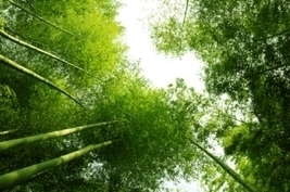 """2012: Road to Rio+20 - Fresh Opportunity to Scale-Up Sustainable Development? - UNEP 