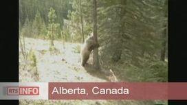 Journal en continu - Un arbre attire les ours au Canada | Rescoop -Faune - Flore - Environnement | Scoop.it