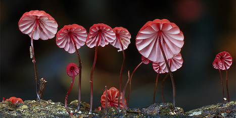 A Magical World Of Rare Mushrooms Revealed By Steve Axford | 16s3d: Bestioles, opinions & pétitions | Scoop.it