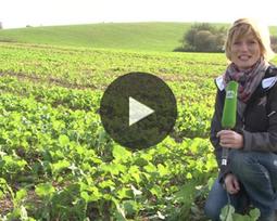 Pflanzenbau-Tipp: Was hilft bei Kohlfliegen im Raps?   agrar   Scoop.it