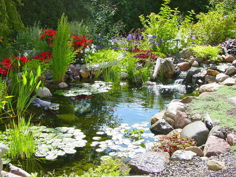 How to get rid of algae in your pond?   Pond Talk   Scoop.it