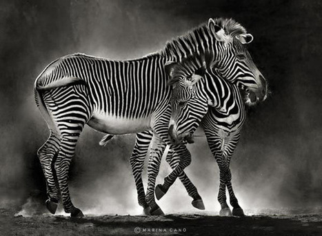 Animal Photography by Marina Cano | All about nature | Scoop.it