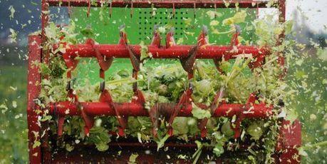 Légumes contaminés : que doit-on craindre ? | Contamination Transport et Consommation | Scoop.it