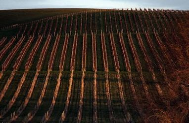 Climate extremes threaten Australia's wine industry | Grande Passione | Scoop.it
