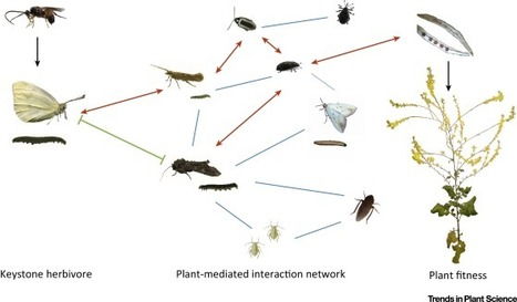 Keystone Herbivores and the Evolution of Plant Defenses: Trends in Plant Science | Plant-Microbe Interaction | Scoop.it