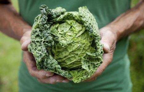 Des choux  et des carottes pour contrer l'insécurité alimentaire | Questions de développement ... | Scoop.it