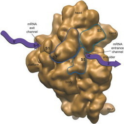 Creating the creators: nanomachine mimics protein synthesis | Nutrition | Scoop.it