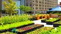 BBC Mundo - Noticias - Una granja portátil siembra ideas y alegría en Nueva York | Lateral Thinking Knowledge | Scoop.it