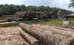 Latinoamérica, el lugar más peligroso para los activistas ambientales | Agua | Scoop.it