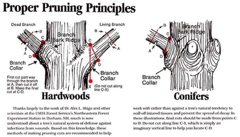 Homestead Survivalist: Trimming And Pruning Guidelines to get Excellent Success | tree trimming,landscaping | Scoop.it