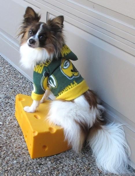 Dog's clothing | MatriSmsBlog | best off mine | Scoop.it