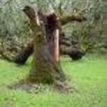 About Tree Removal | eHow | Private and Public Place  - Tree Removal Expert Service | Scoop.it