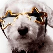 De futurs chiens stars réunis lors d'un casting pas comme les autres ! | CaniCatNews-actualité | Scoop.it