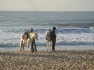 Women preying on men: Sexual tourism in Gambia | Excellent Long Form | Scoop.it