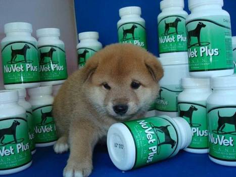 Why You Should Give Your Dog Vitamins Like NuVet Plus | NuVet Plus Reviews | Scoop.it