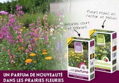 LA GAMME DES PRAIRIES FLEURIES S'ENRICHIE DE DEUX NOUVELLES COMPOSITIONS FLORALES  ! | Actualités Nova-Flore | Scoop.it
