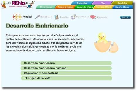 Desarrollo embrionario | ciència | Scoop.it