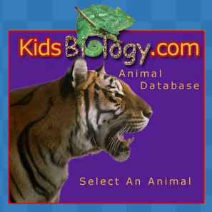 Animal Database - Animals For Kids - By KidsBiology.com | Our World & The Future | Scoop.it