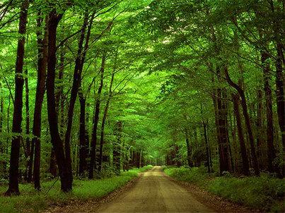 Natureza: LPN preocupada com recuo na política de conservação - Diário Digital | Meio Ambiente em Portugal | Scoop.it