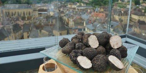 Truffe d'été et champagne : l'accord parfait au menu le mardi soir à Sarlat | Agriculture en Dordogne | Scoop.it