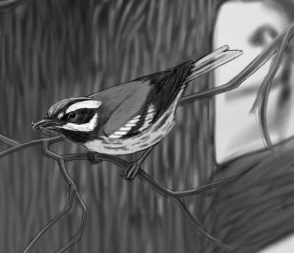 'Subirdia' author urges appreciation of birds that co-exist where we work, live, play | Les sons de la nature | Scoop.it