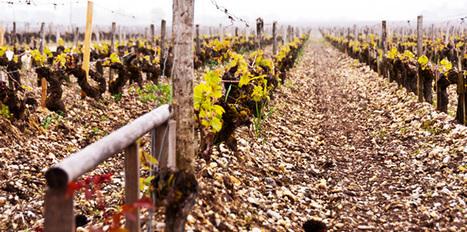L'investissement dans le vin : que choisir ? - Le Nouvel Observateur | Hôtellerie -restauration | Scoop.it
