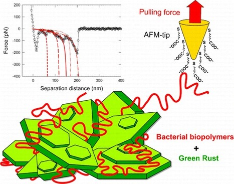 Nanoscale Reactivity of Biologically and Chemically Formed Green Rust Crystals | Mineralogy, Geochemistry, Mineral Surfaces & Nanogeoscience | Scoop.it