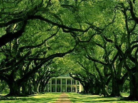 Wall Photos   Facebook   Oak Alley Plantation: Things to see!   Scoop.it