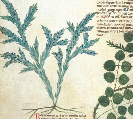 23 Medieval Uses for Rosemary | Alternative Health Trends | Scoop.it