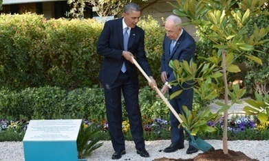 Tree given by Barack Obama to Israeli president not dug up –yet | Possible Future | Scoop.it