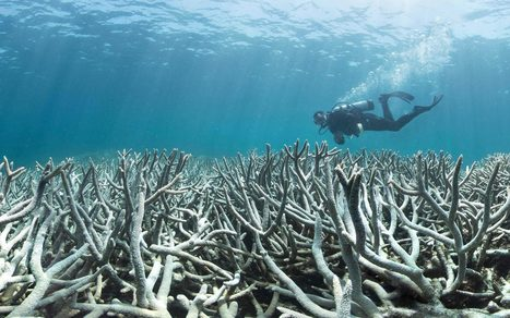 Rising sea levels caused by global warming could be good news for coral reefs | Weather | Scoop.it