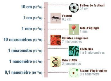 L'étude des nanoparticules, une thématique émergente en toxicologie alimentaire   EntomoScience   Scoop.it