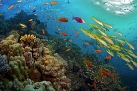 Scientists demand urgent action on reef mine plans | Geography | Scoop.it