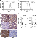Reactive oxygen species-mediated therapeutic response and resistance in glioblastoma | A Tale of Two Medicines | Scoop.it