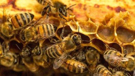 Lot-et-Garonne : 20% de sa production agricole pourrait disparaître faute de pollinisateurs - France 3 Aquitaine | apiculture 2.0 | Scoop.it