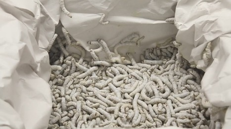 6,500 silkworms help 3D-print a building | 3D Printing and Fabbing | Scoop.it
