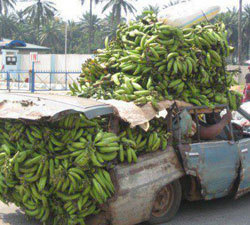 Greed for gold will affect food security in Ghana   Food issues   Scoop.it