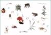 Phyloboite : un logiciel gratuit pour s'entraîner à classer des collections d'êtres vivants. - svtcol | Phyloboite | Scoop.it