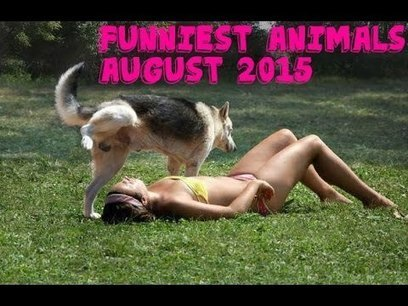 Funniest Animal Videos August 2015 - YouTube | Fail Videos and Funny Stuff | Scoop.it