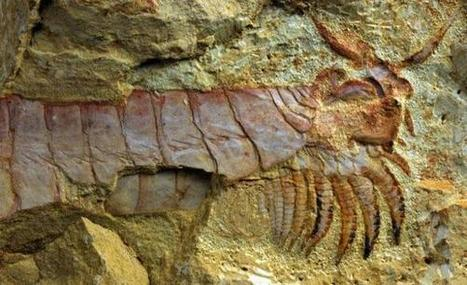 500-million-year-old sea creature unearthed | Anthropology and Archaeology | Scoop.it