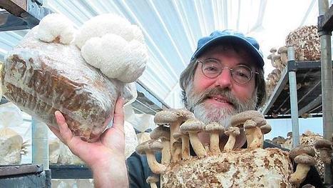 Un champignon tueur d'insectes, le brevet qui dérange Monsanto | Science et Santé Naturelle | Scoop.it