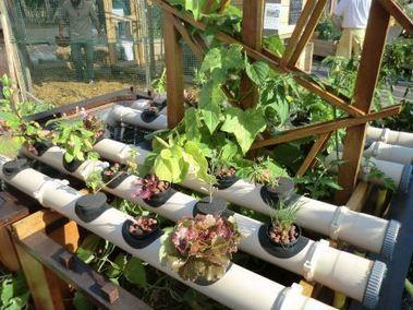 Le Living Roof, l'espace d'expérimentation et d'agriculture urbaine, de la Cité de la Mode et du Design - La Fiancée de Paris   Agriculture urbaine, architecture et urbanisme durable   Scoop.it