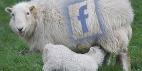 Réseaux sociaux : 59 % des liens ne sont jamais visités | Actualité Houssenia Writing | La Lorgnette | Scoop.it